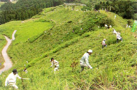 水源涵養林の下草刈り(阿蘇市)
